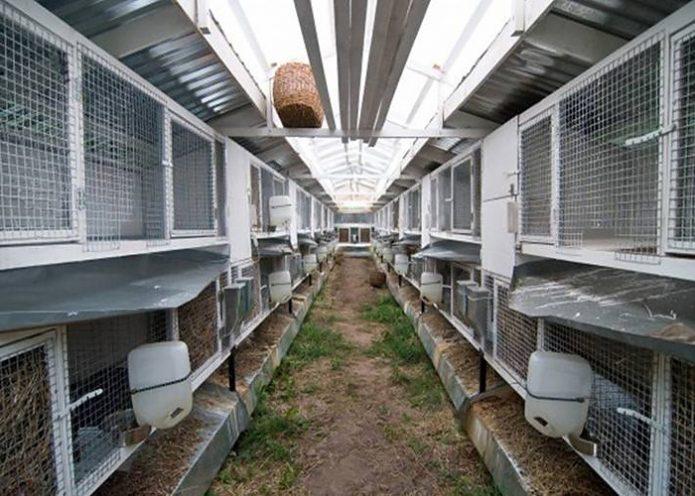 Шеды для бизнеса на кролях