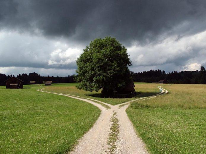 Дерево и развилка дороги