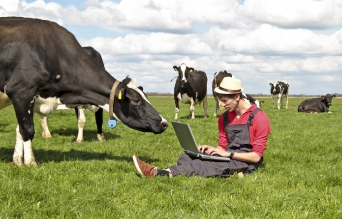 Молодой человек, сидящий на поле с ноутбуком, и коровы рядом