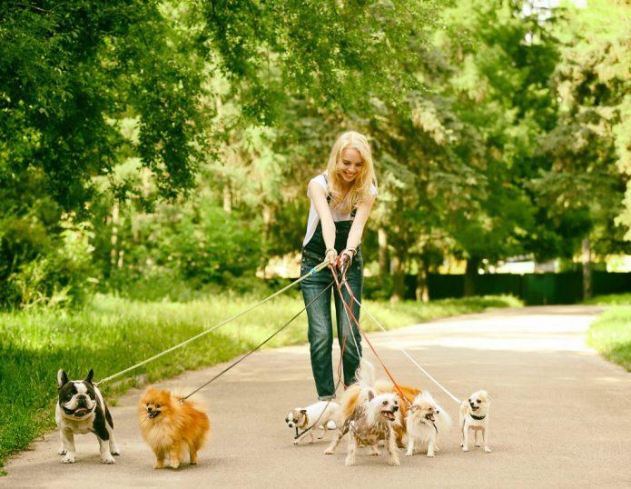 Девочка выгуливает собак
