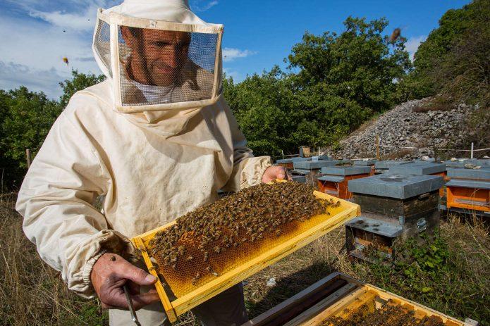 Разведение пчел и добыча мёда
